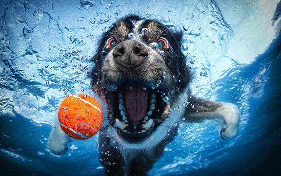 Water Sharks... err... Dogs! 6983167678_ed9e5988ba_z