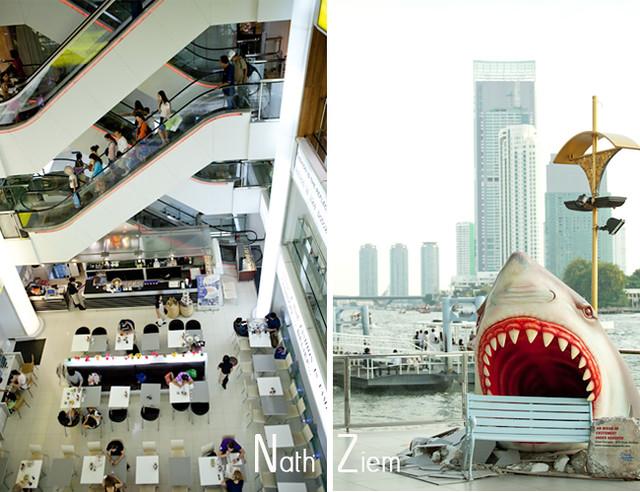 bangkok_requin