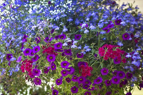 flowers-5966