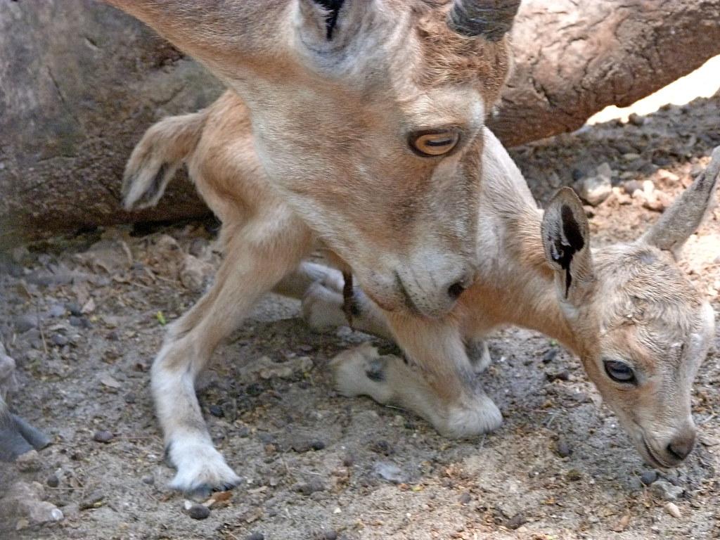 12-05-2012-just-born5