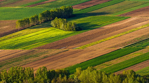 trees field lines sunshine evening slovenia valley fields slovenija vipavavalley