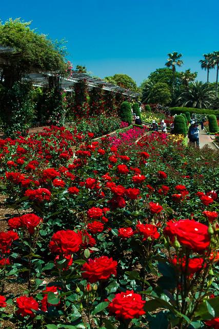Rose Garden (Yatsu, Chiba, Japan)