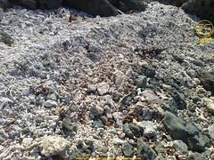 Pile of Dead Corals