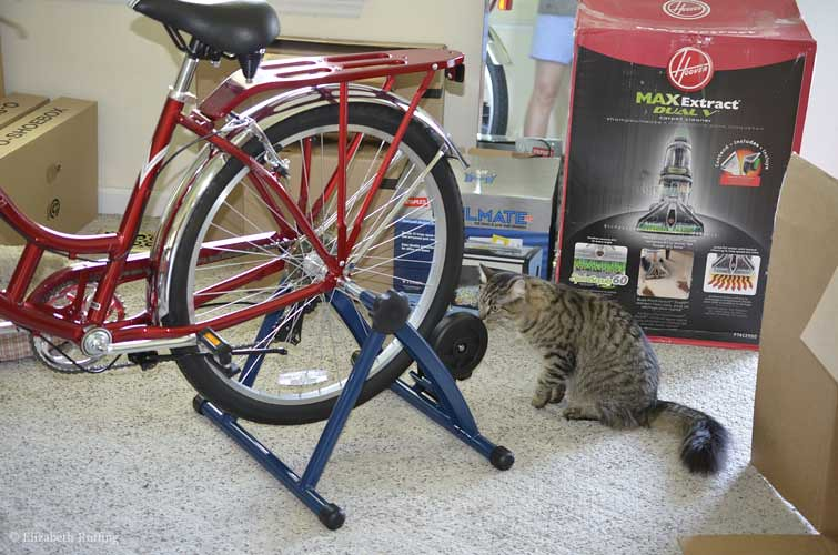 Kitty investigating bike trainer stand