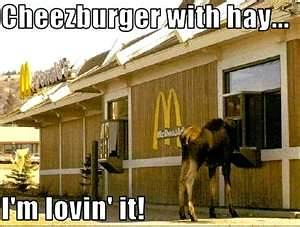 Cheezburger with Hay