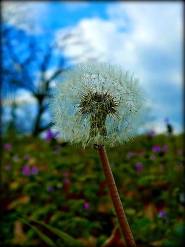 flowers weeds nikon arkansas wildflowers michelehenry fountainhill arkansaswildflowers southeastarkansas nikoncoolpixl120 nikonl120 fountainhillarkansas micheleburnsidehenry michelehenryphotography