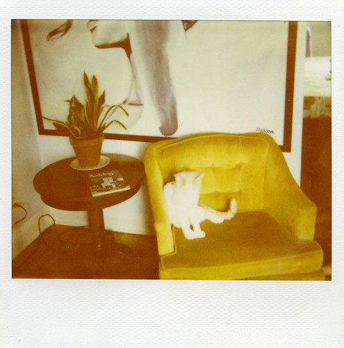 polaroid - Mr Giggles