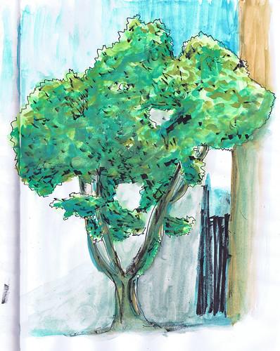 2012-06 árvore sé