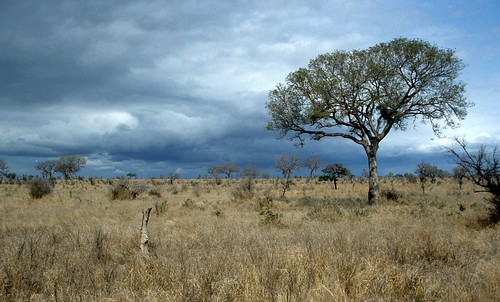 Trees, grass and gas: the battle for dominance | GrrlScientist ...