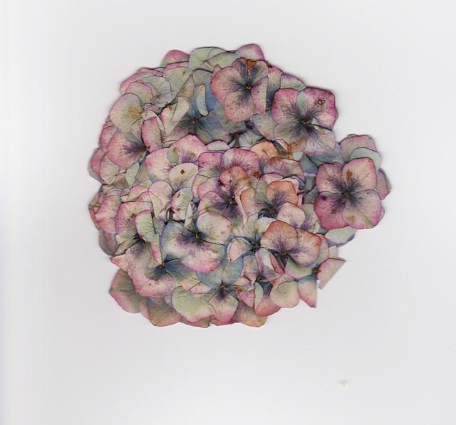 Pressed Flower.