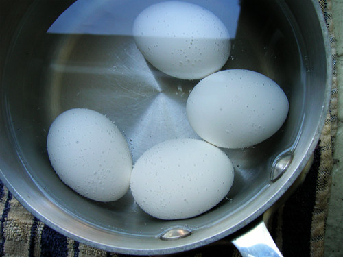 basic boiled eggs