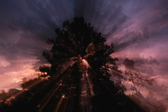 pine-sunset