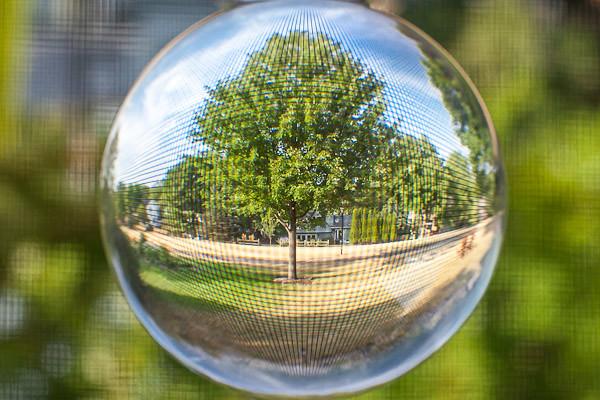 Crystal Ball - Through the Screen Porch