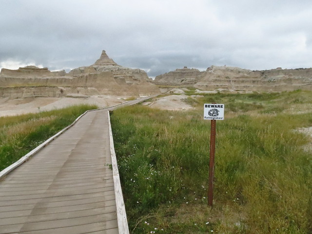 RATTLESNAKES IN THE BADLANDS