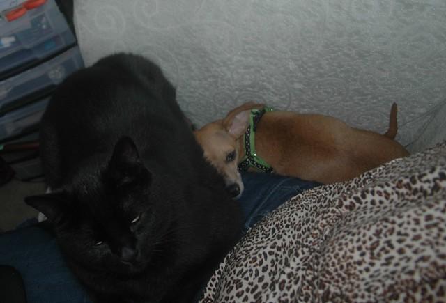 Black Cat Kodi