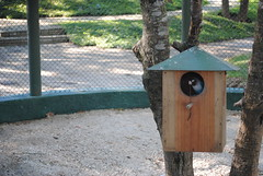 wood, birdhouse, bird,