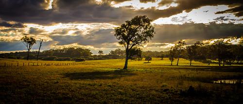 australia nsw countrynsw morperth