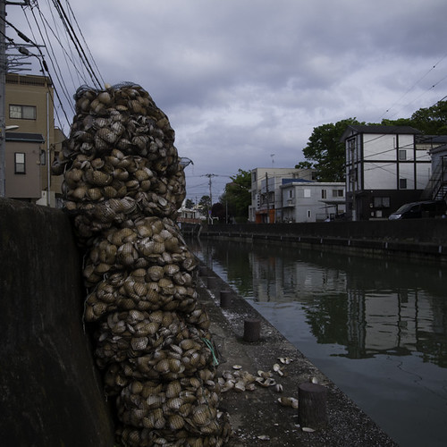 Clam Culture, Urayasu