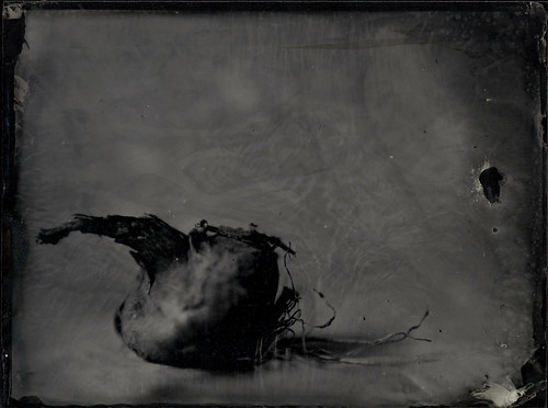 Oignon by Francis Courtemanche
