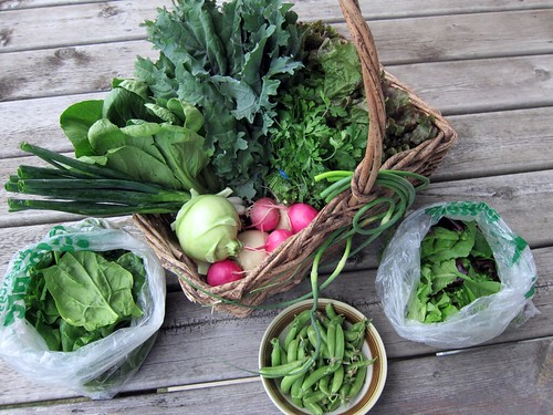 A big wicker basket filled with vegetables, along with a couple bags of leafy things and a bowl of snap peas.