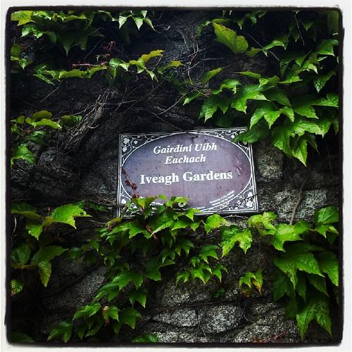 Iveagh Gardens entry