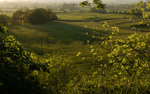 trees grass landscape countryside cows quote farm may lancashire explore fields eveninglight longridge ribblevalley johnsmithspark lancashirelassphotos suebristo