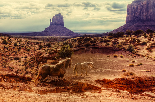 Horses in Monument Valley