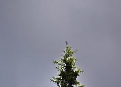 Gausdalen 22.06. til 26.06.12