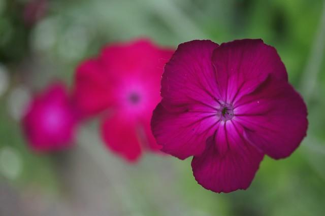 easterbrook gardens - flowers