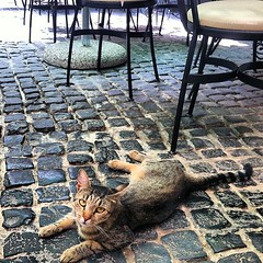 Restaurant cat let me pick him up. Like a tame Tigris but 50km away.