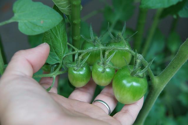 サントリー本気野菜トマトかんたんルビーノ