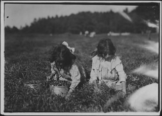 Camille Carmo, Justine, 7 and 9 years old. The older one picks about 4 pails a day. Youngest was picking also, September 1911
