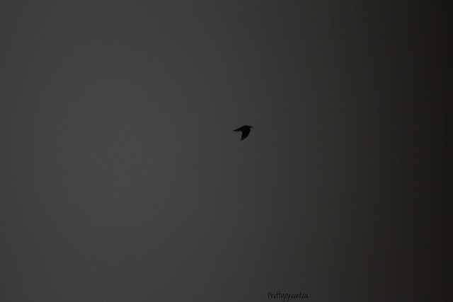 prettygreentea bird