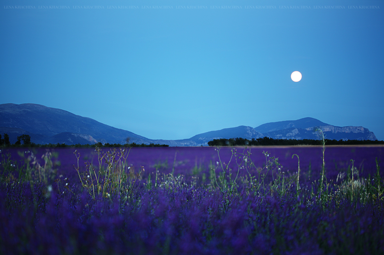 Provence: Lavender fields at night