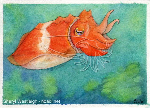 Orange Cuttlefish Watercolor