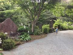 正覚寺到着、猫いるよ (2012/7/16)