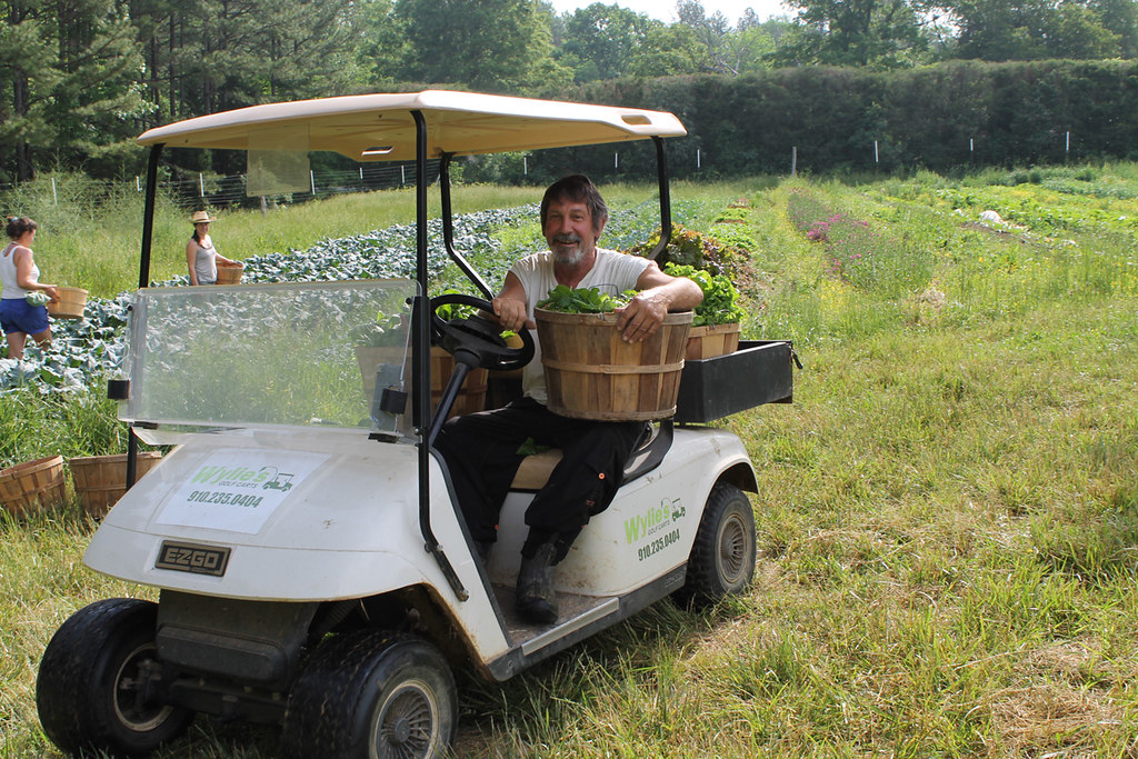 Returning from lettuce harvest at Perry-winkle Farm