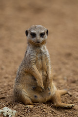 Chester Zoo-6647