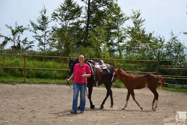 Pferdehof (15)