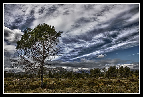 cielo árbol tormenta jemonbe bestcapturesaoi dblringexcellence tplringexcellence