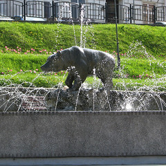 Bear in fountain