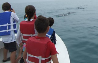 watching bottlenose dolphins!