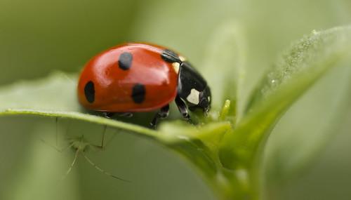 Ladybird & Spying Bug!