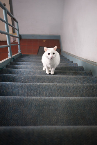 Scrambling up the stairs