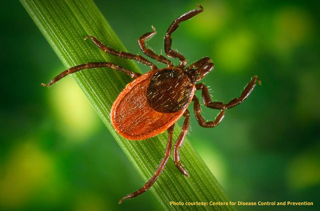 Dog Lyme Disease Natural Treatment