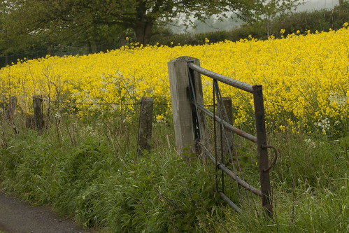Farm fence & gate, Shropshire