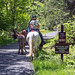 Minnewaska State Park - Wawarsing, NY - 2012, May - 22.jpg