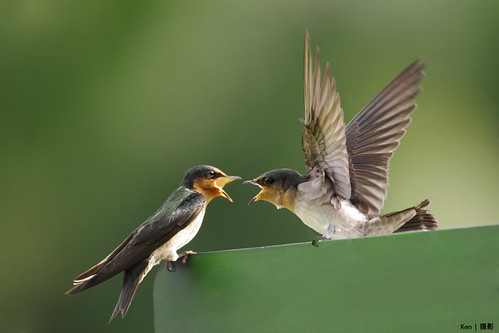 (Explored) A fierce quarrel going on....
