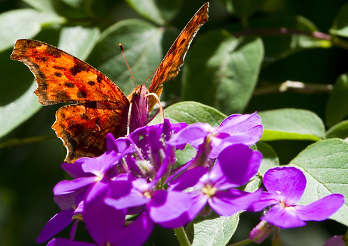 Butterfly on a Flower by Ricky L. Jones Photography