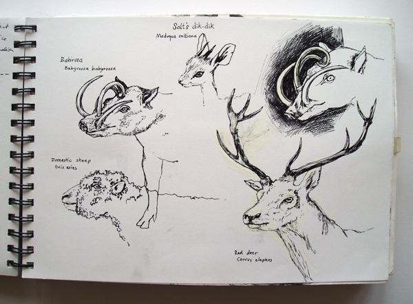 horned mammals